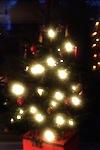 Letztes Keiko im Advent